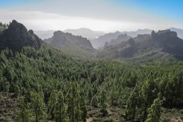 Im Inneren der Insel gibt es grüne Täler – und sogar einen Wald auf Gran Canaria. Foto: Pixabay