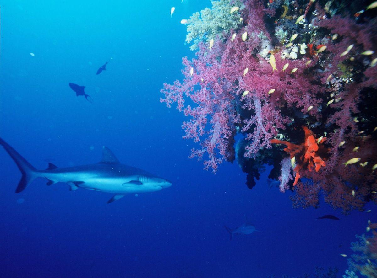 Haie im Roten Meer: Diese Arten könnt Ihr antreffen!