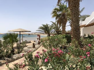 Ägypten - Urlaub: Das Rote Meer liegt wieder voll im Trend! Foto: Sascha Tegtmeyer