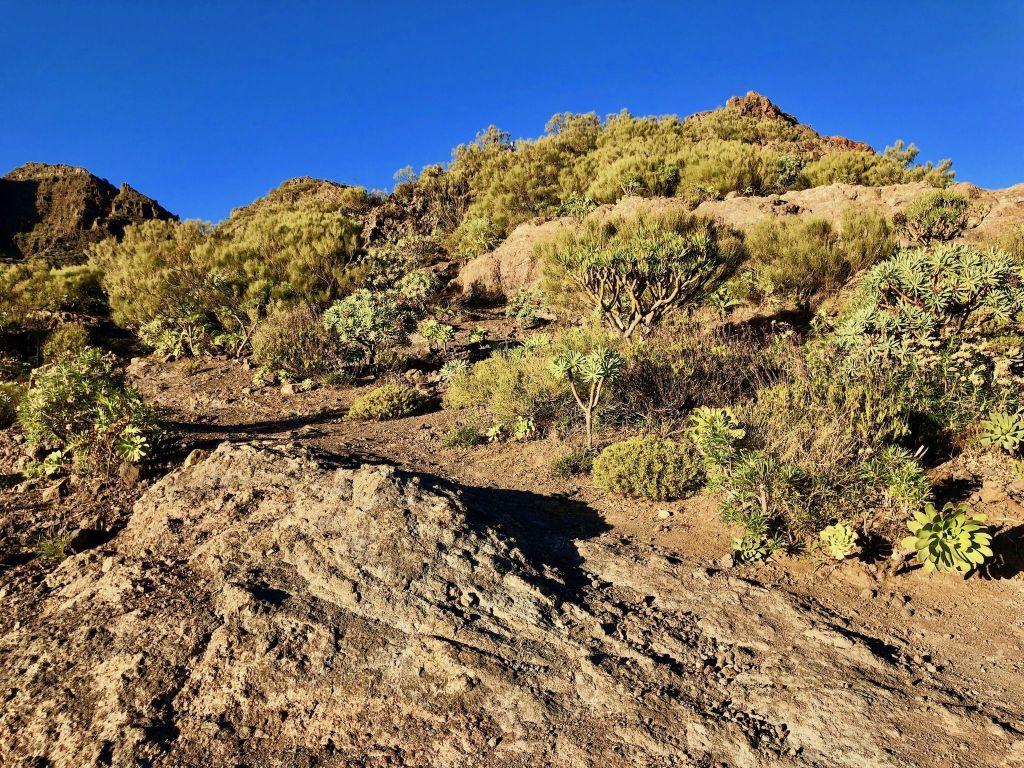 Wandern und klettern im Masca Gebirge auf Teneriffa lohnt sich – die Ausblicke sind wirklich spektakulär. Foto: Sascha Tegtmeyer