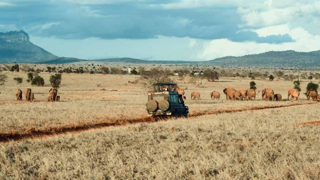Safari in Afrika: für den Kontinent solltet Ihr einen Reiseexperten zu Rate ziehen. Foto: Unsplash