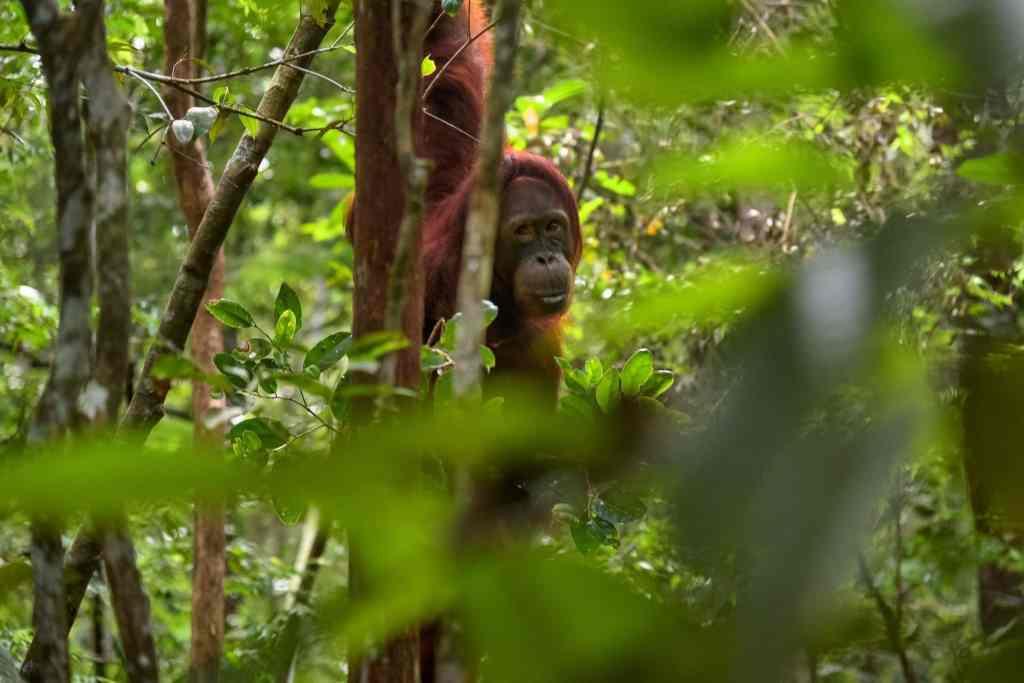 Die Orang-Utans sind das Aushängeschild Borneos – die Insel ist aber auch landschaftlich wunderschön. Foto: Unsplash