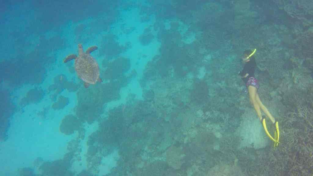 Schnorcheln auf den Malediven: Schildkröten, Adlerrochen und Haie sind keine Seltenheit. Foto: Sascha Tegtmeyer