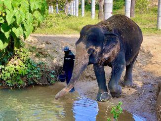 ¿Qué distingue al santuario de elefantes de Phuket? Eché un vistazo más de cerca a las instalaciones. Foto: Sascha Tegtmeyer