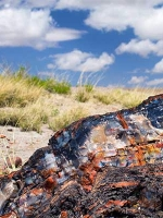 Petrified Forest National Park Audio Guide