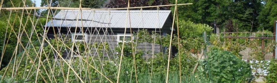 It's the best-kept cottage garden in the village.