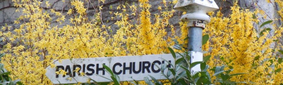 Forsythia on the corner of Church Lane.