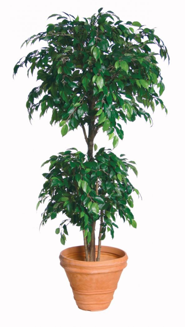 Artificial Silk Ficus Natasha Tropical Tree Just Artificial