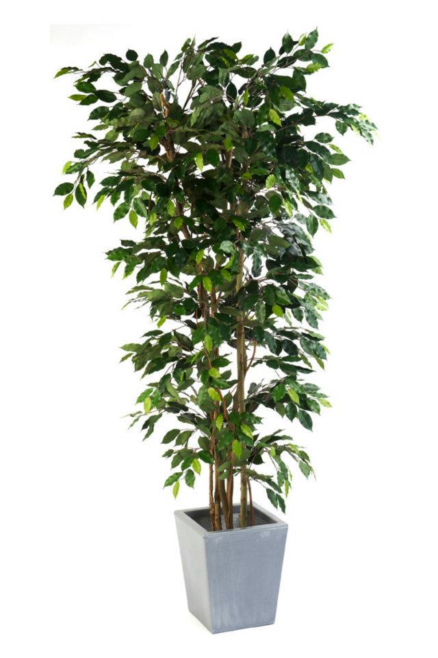 Artificial Silk Ficus Nitida Premium Bush FR Just