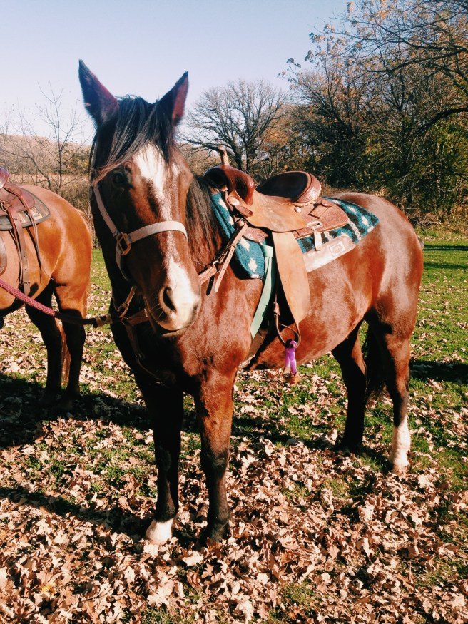 Trail Ride on a Fall Day - Horseback Riding in Iowa