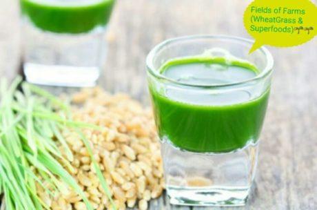 Wheatgrass-Living Chlorophyl