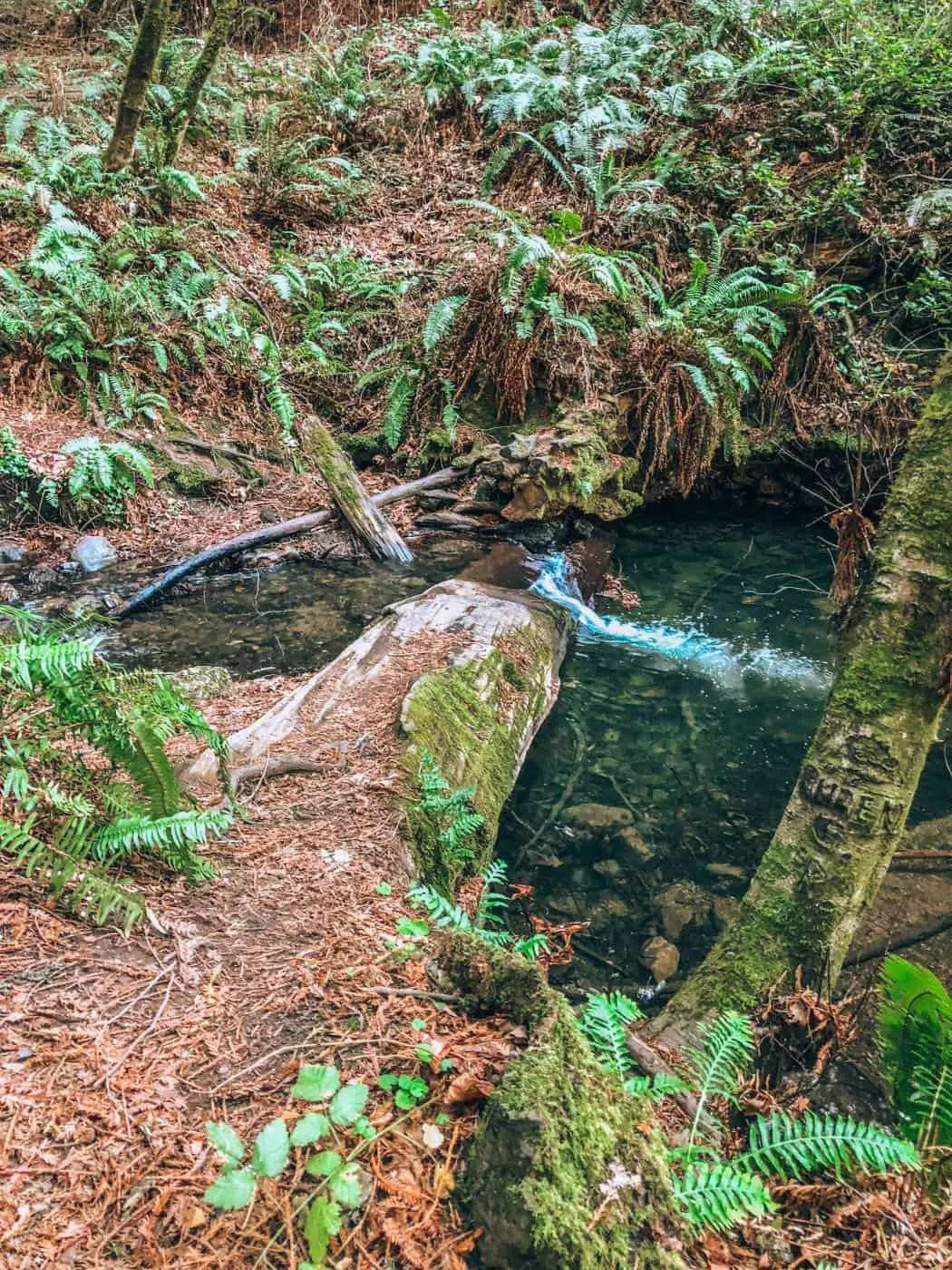 Purisma Creek