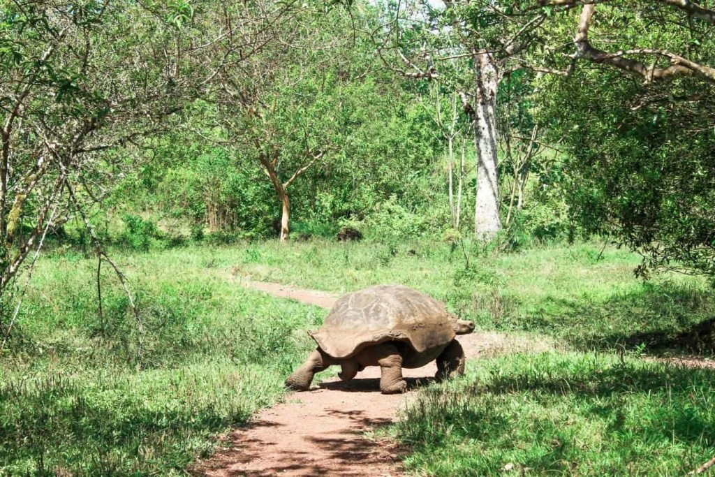 plan to see the Giant Tortoises on the Galapagos Islands