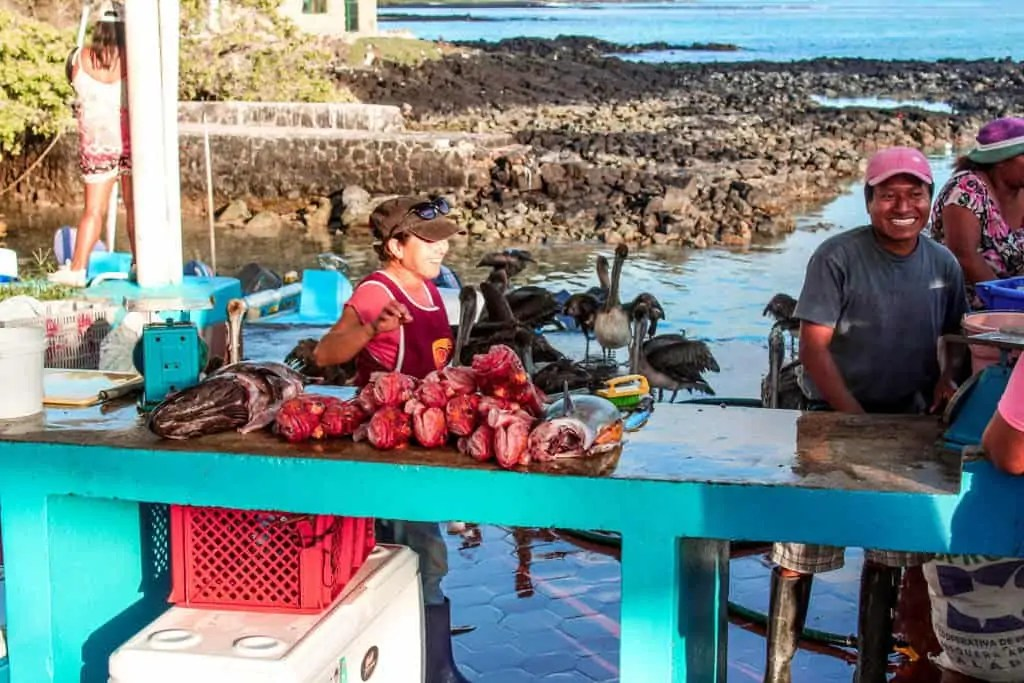There are plenty of budget activities on the Galapagos like witnessing the Fish Market