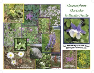 Camera Ready Flower Brochure-1