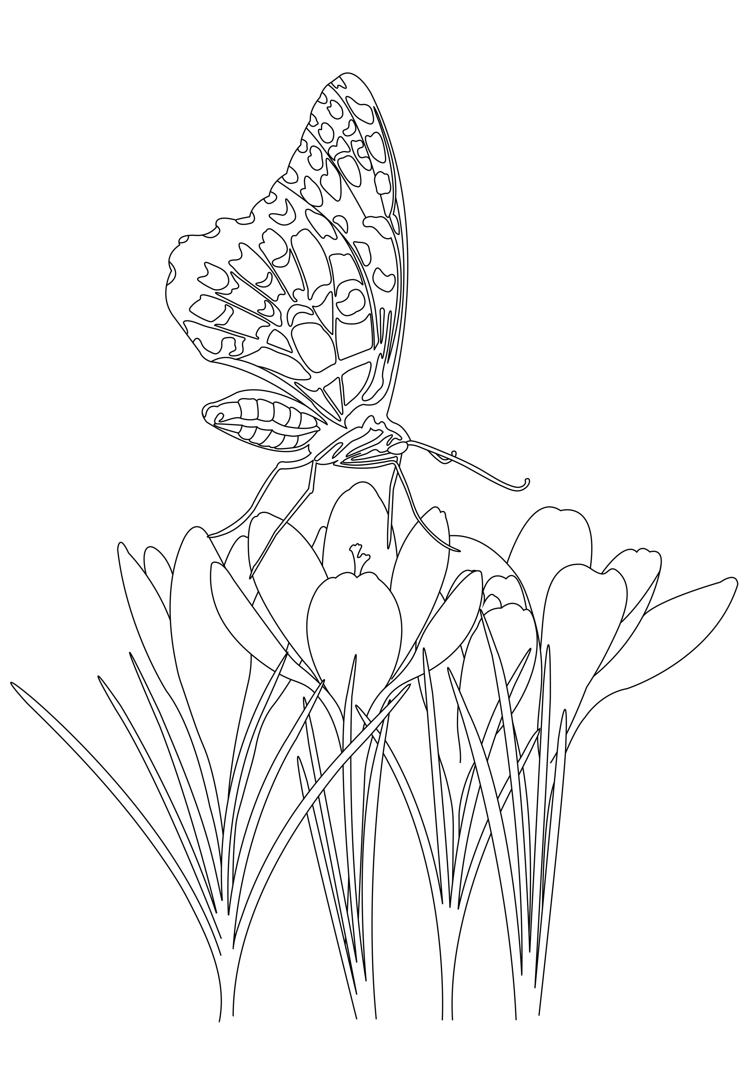 Papillon Sur Fleurs Papillons Amp Insectes Coloriages