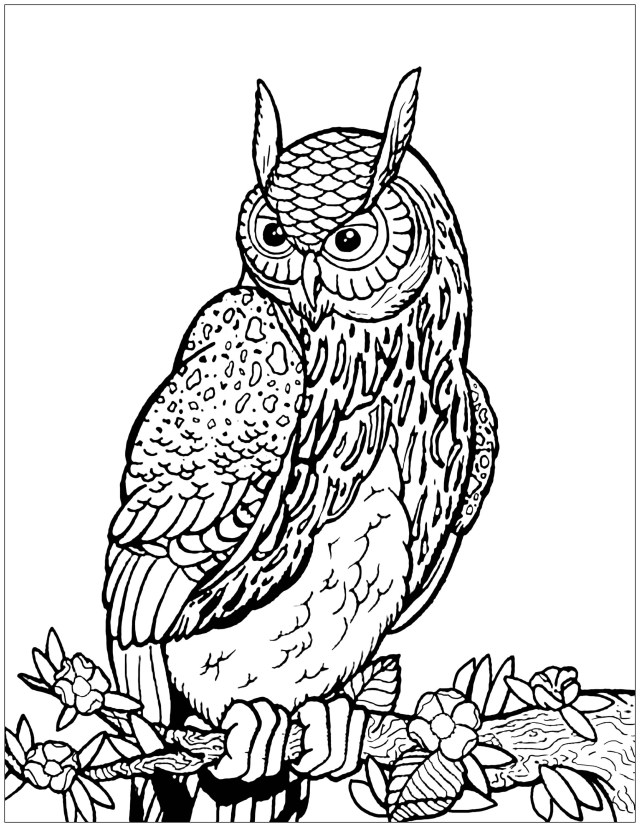 Owls to download for free - Owls Kids Coloring Pages