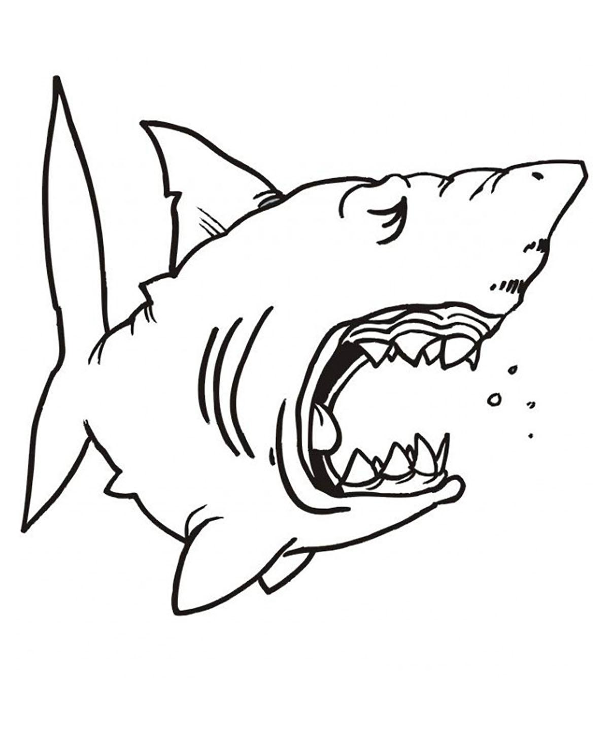 Sharks For Children