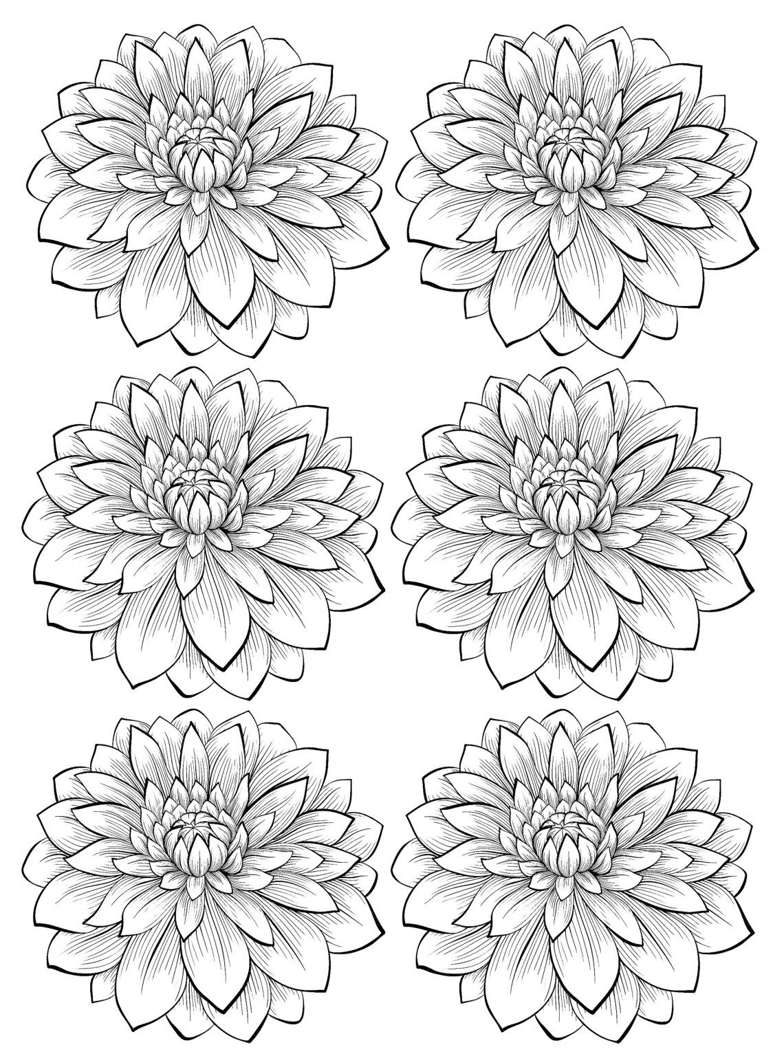 Six dahlia flower - Flowers Adult Coloring Pages | coloring pages for adults flowers