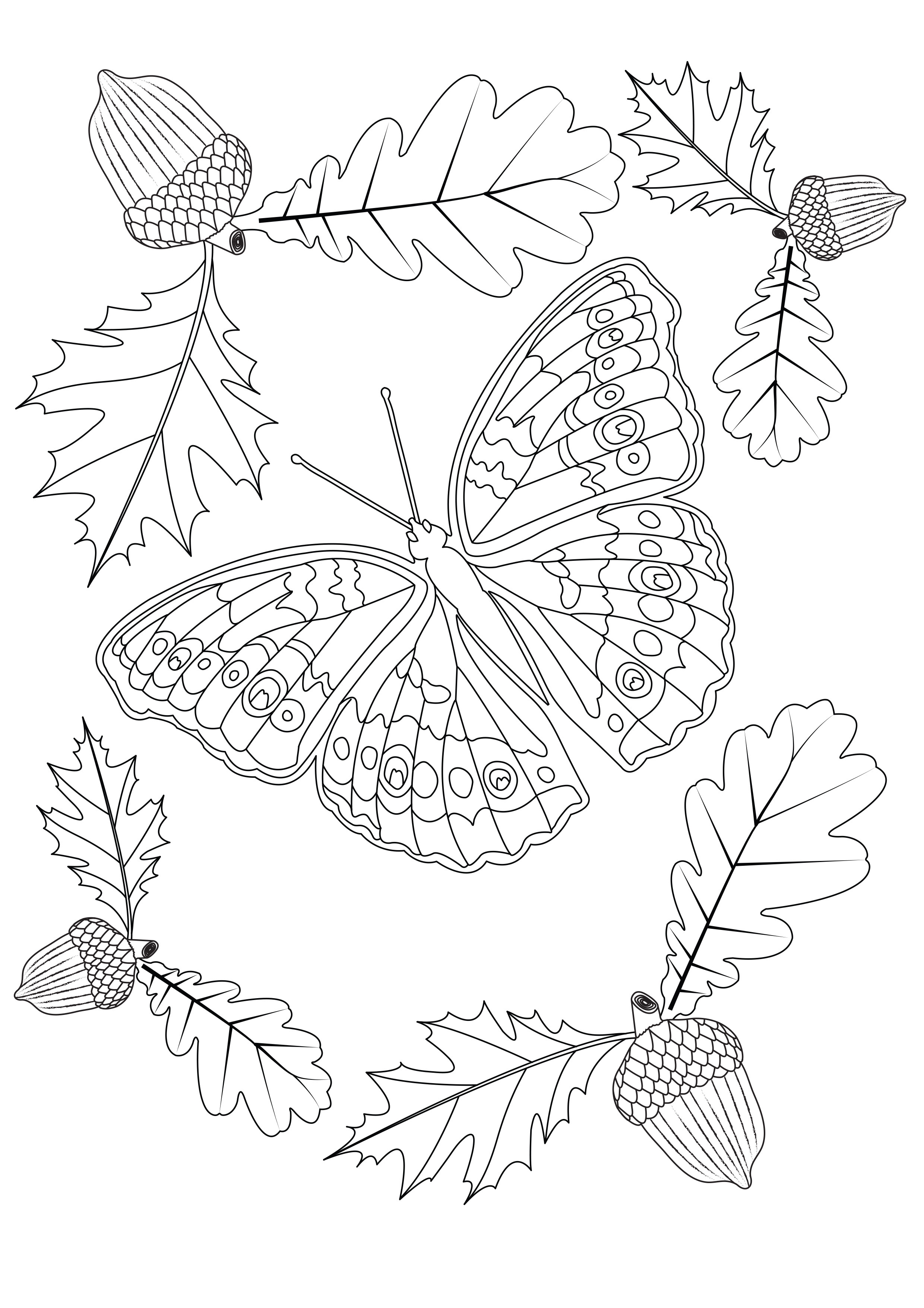 Autumn Butterfly Butterflies Amp Insects Adult Coloring Pages