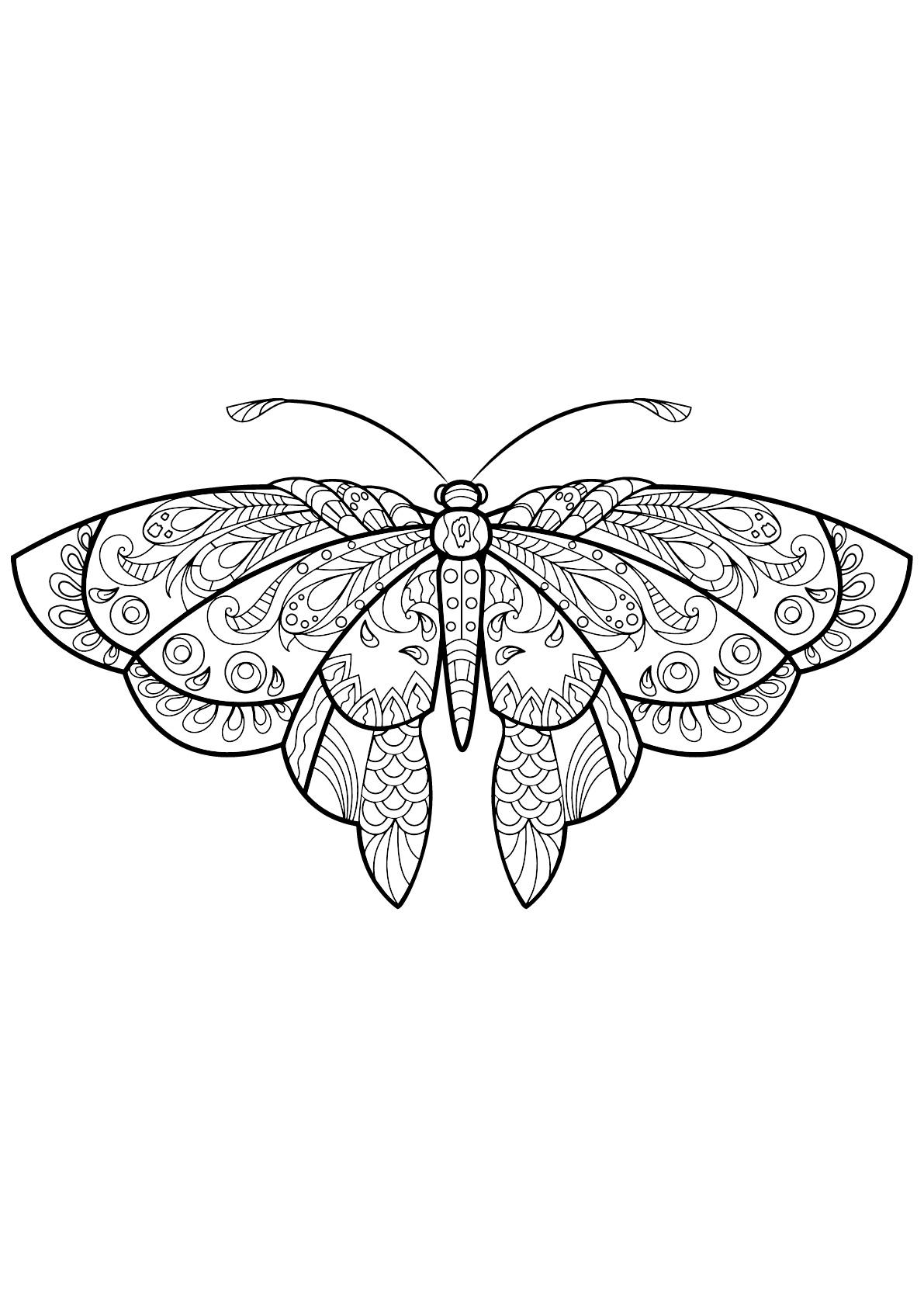 Butterfly Beautiful Patterns 1