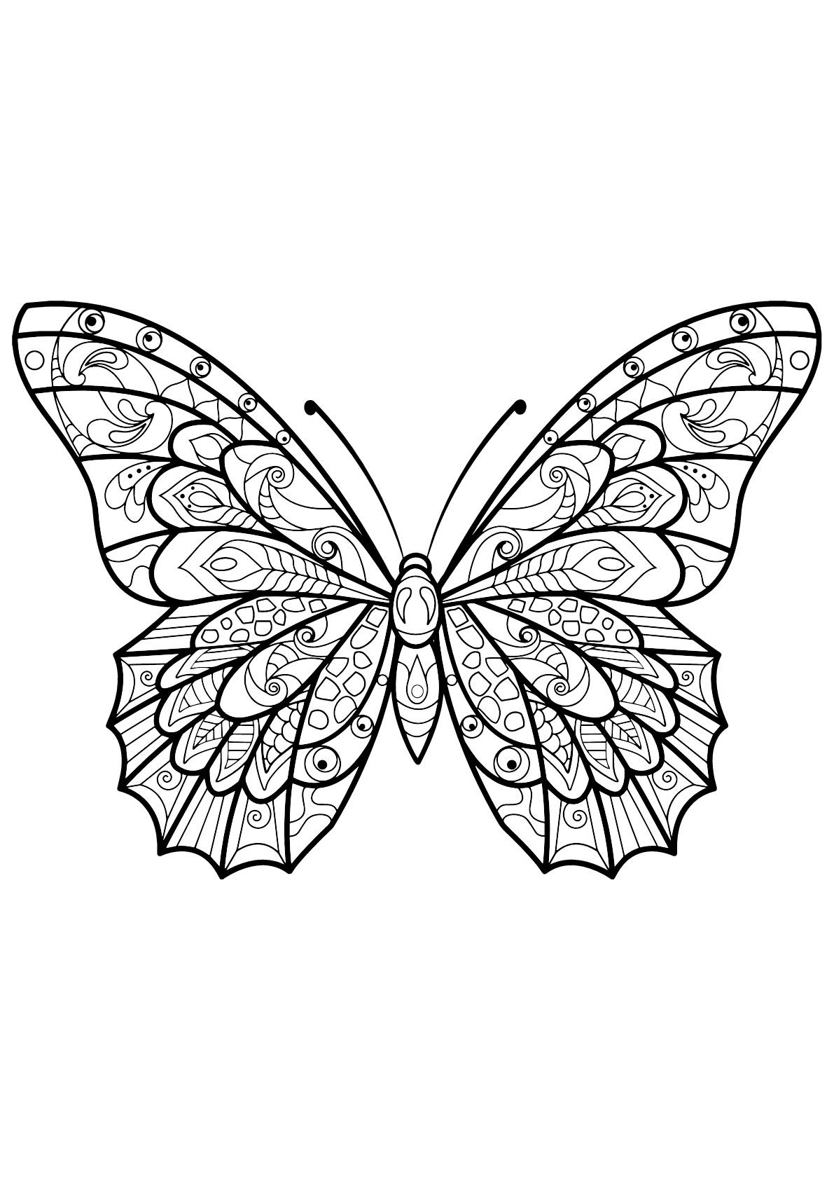 Butterfly Beautiful Patterns 3