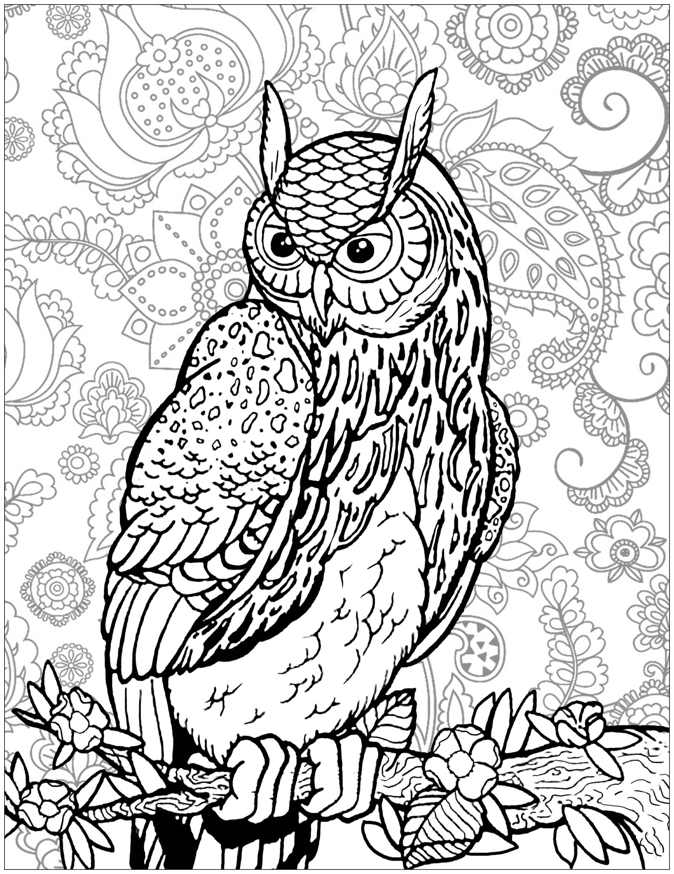 Owl On Tree Branch Background