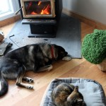 Getting all cozy in our Canadian home, we got a woodstove!