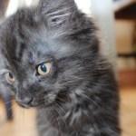 Cutest little kitten! A new mouser on the farm