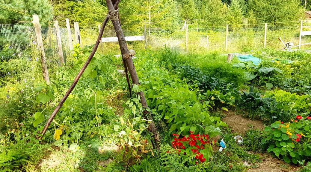 lovely canadian garden.