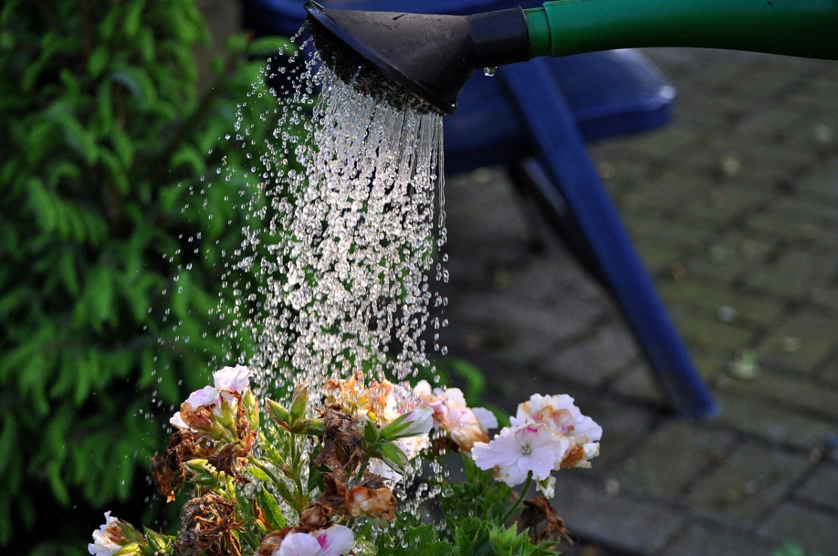 Tips for conserving water outside the home