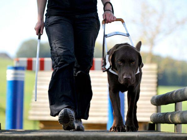 Risultati immagini per cani guida