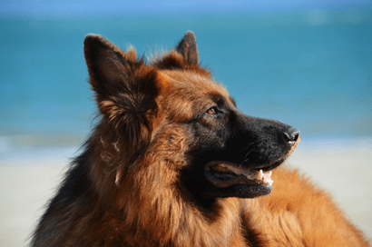5 Important Tips to Stop Dog shedding that every Dog Owner should know