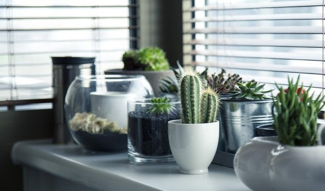 decorate home with plants