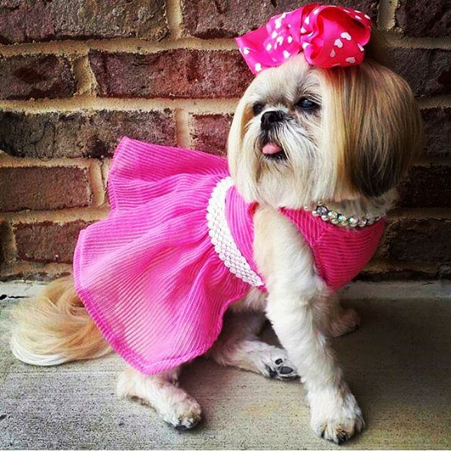 Best 10 ways to make your Dog Fashionable