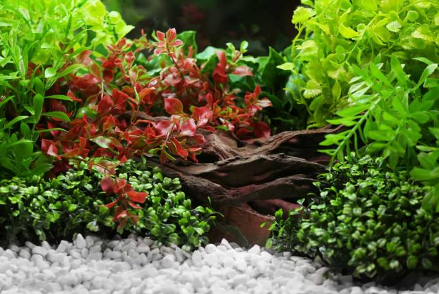 best aquarium substrate for betta
