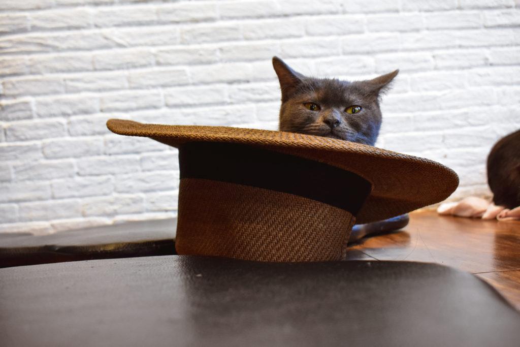 CAT 'n' CUP Cat Café. A cat laying in a hat