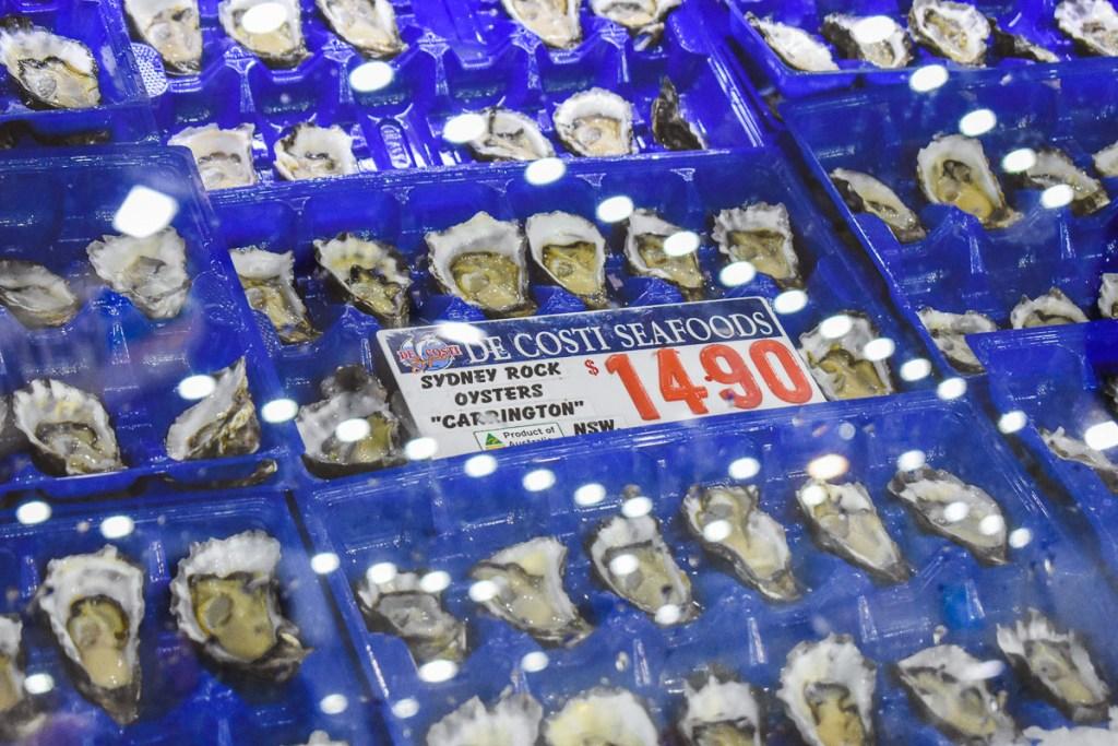 Sydney rock oysters Carrington