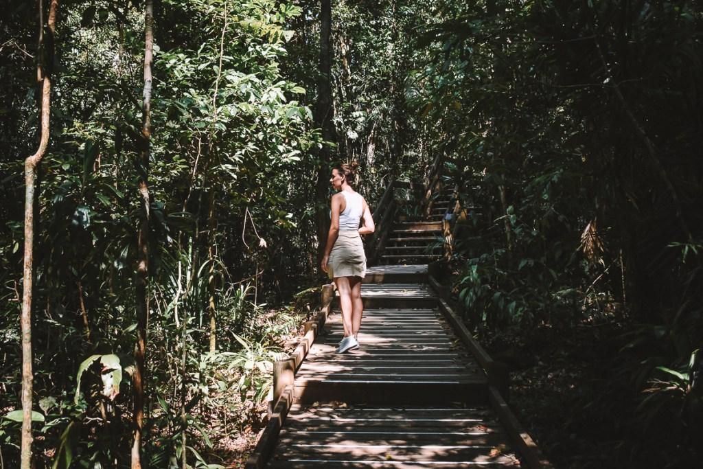 Daintree rainforest board walks