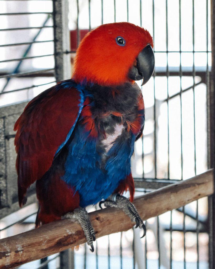 Parrot in open cage Granite Gorge Mareeba