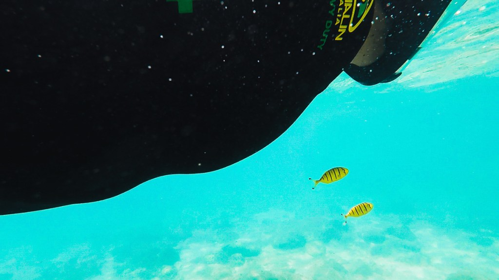 Snorkelling the Great Barrier Reef with 2 yellow fish
