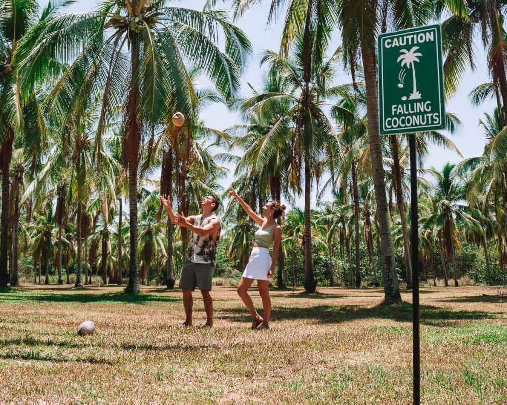 Falling coconuts sign and couple catching coconuts