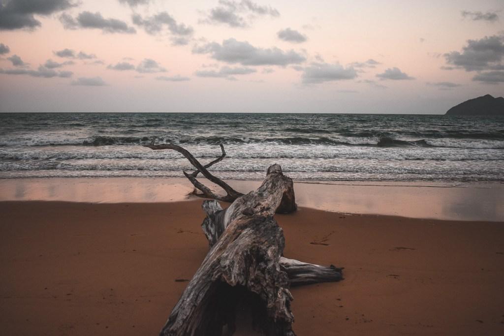 old tree on Wongaling Beach at sunset