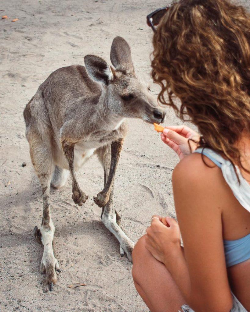 Horizons Kangaroo Sanctuary & Camp Ground Feeding