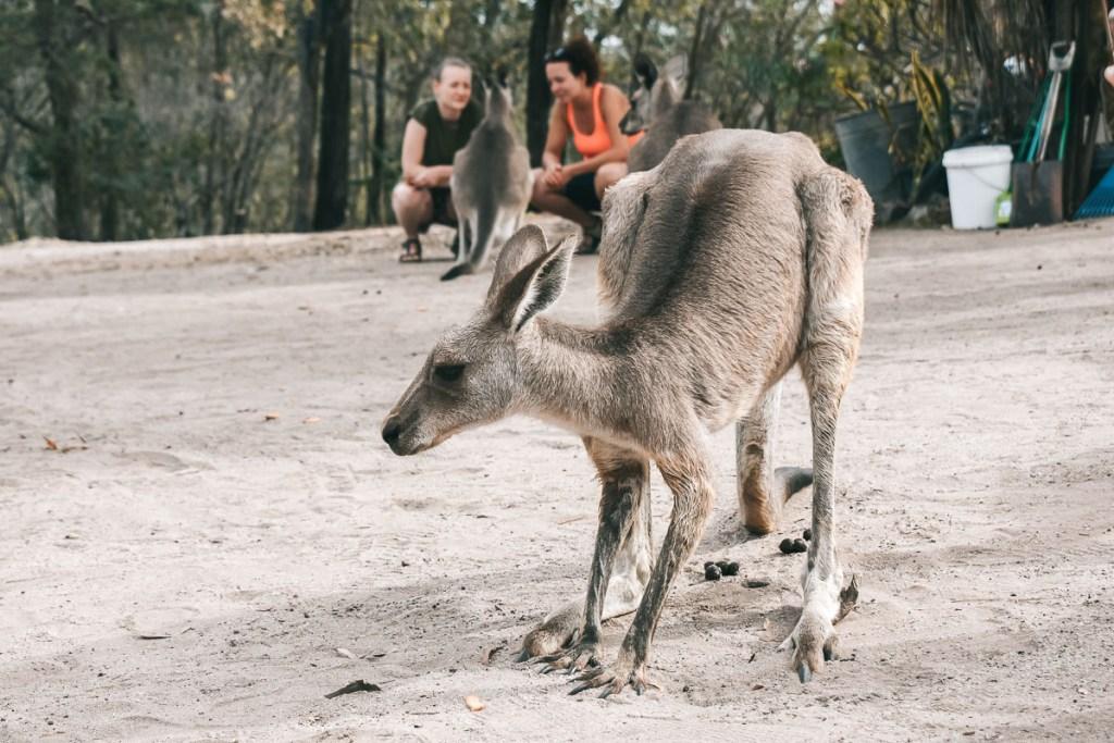 Horizons Kangaroo Sanctuary