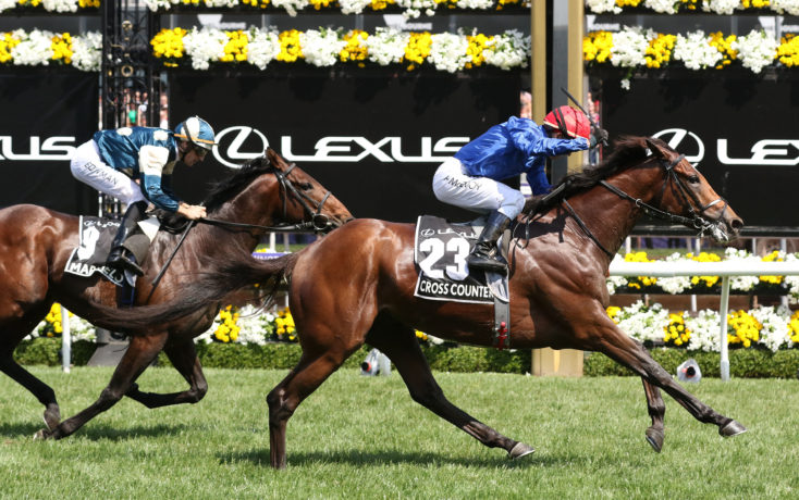 Cross Counter - Melbourne Cup