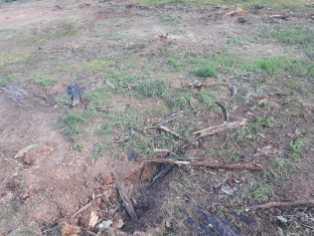 Lugar del cultivo de coca después de ser asperjado con glifosato
