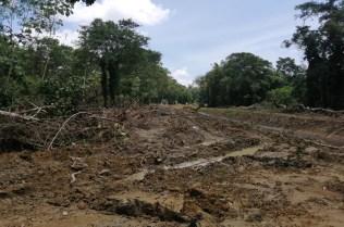 Afectación Bosque primario y secundario Pedeguita y Mancilla