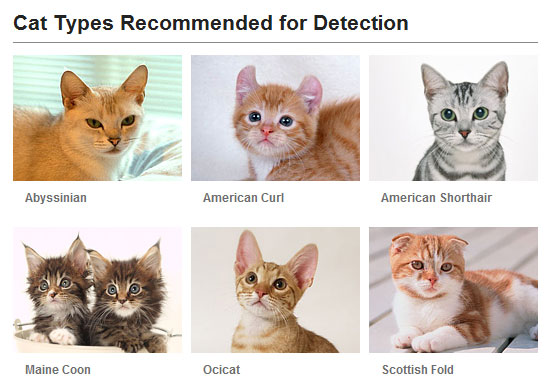 Cat Face Detection