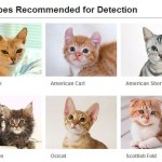 What kind of Cat can Fujifilm face detection detect ?